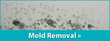 We are your solution for mold removal in Connecticut!